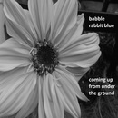 babble rabbit blue - coming up from under the ground