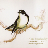 Kate Doubleday - Pied Flycatcher