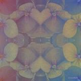 Evo Auxilium - Chrysalis