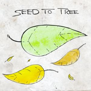 SEED TO TREE - Lonely Leader