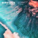 Bird Dog - Misty Shrub