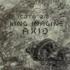 King Imagine - GM 45