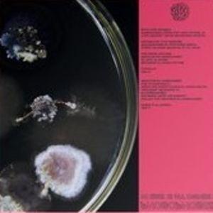 Phobophobes - Chucetta