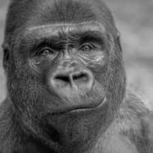 Adrian Carter - Gorilla Dub