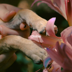Jordana - Divine