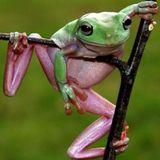 Erdal Kemahli - Prog frog
