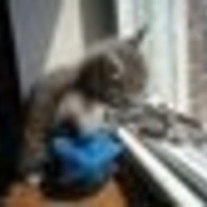 Private Jones - Kitten