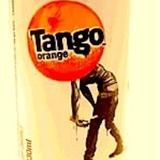 Bearded Tree Frog - Tango Orange