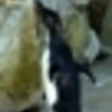 The Censor Penguins - I'm Sorry