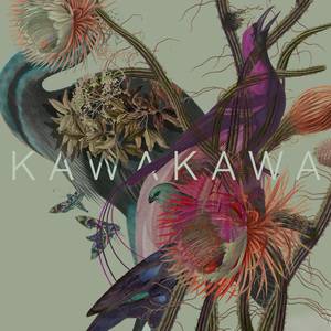 Kawakawa - Universe Shifting (Dinner With Daisy Records)