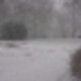 Vintage Nights - Snowballtree