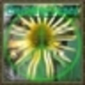 w1z11 - Emerging Peace