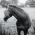 Kristin McClement - Hoax Of A Man