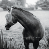 Kristin McClement - Blackfin Gulls