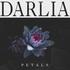 Darlia - Queen of Hearts