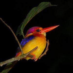Nadeem Ahmad - Night Bird