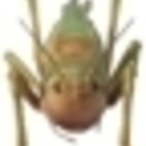 MOTHER OGRE - Grasshopper