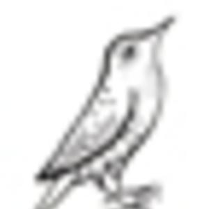 Starling - Paper Bird