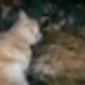 Pia Silvi - Warm Hearths And Sleeping Cats