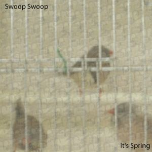 Swoop Swoop - It's Spring