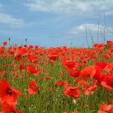 vincent burke - on remembrance day