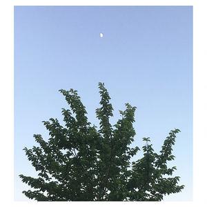 BirdyHop - Blossom Tree
