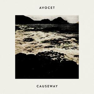Avocet - Causeway