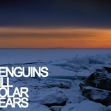Penguins Kill Polar Bears - Sandcastles