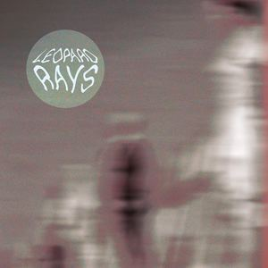 Leopard Rays - Easy Tiger