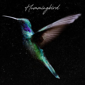 Paul Taylor - Hummingbird