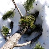 Odina - Snow