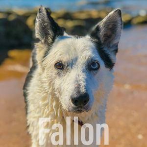 esperi - Fallon