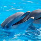 La Galeria - Vamos delfines