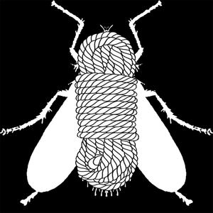 flies+flies - Threads