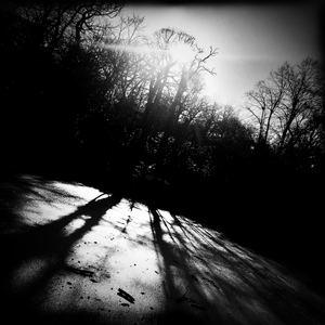 Suzie Stapleton - Thylacine