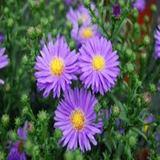 Matteo - Flowers