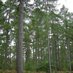 William Waddingham - 02 New Dawn 2