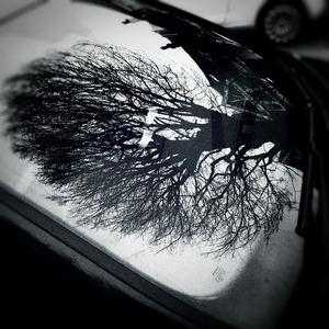 Suzie Stapleton - Blood On The Windscreen