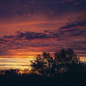 Crushed Veneer - Sunrise