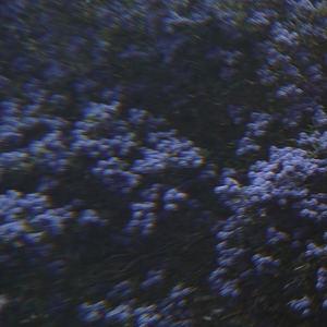 NicolasLewis - Pink Sunrise