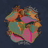 himehabu - Orbifolia