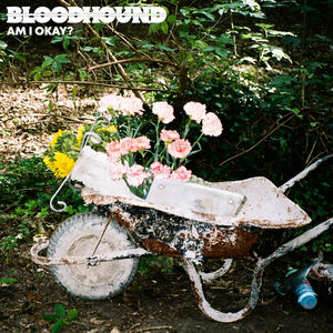 Bloodhound - Am I Okay?
