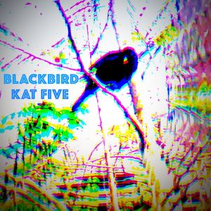 Kat Five - Blackbird