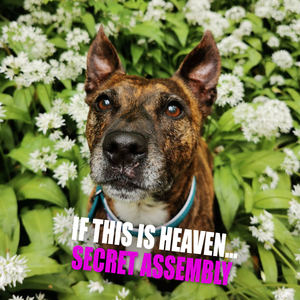 Secret Assembly - If This Is Heaven