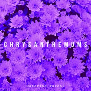 Caterina Turchi - Chrysanthemums