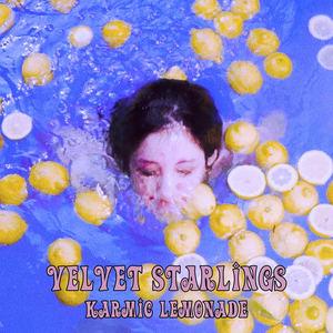 Velvet Starlings