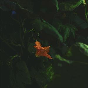 Aforest - Slide