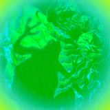 Bearded Tree Frog
