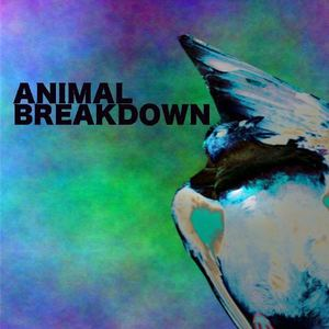 ANIMAL BREAKDOWN
