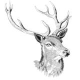 Red Deer Club